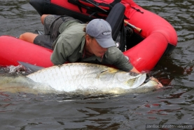 Overwhelming - The size of this large fish is quite intmidating compared to the angler and his vessel