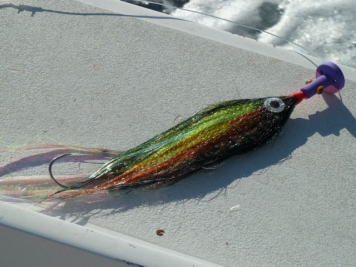 The fly which caught my first sail - A 10-inch Flashy Profile Fly in green, gold and black, with a pink and purple Cam Sigler popper head, fished on an S.A. Bluewater Express line, on a Sage 12 wt. rod with an Abel Super 12 reel.