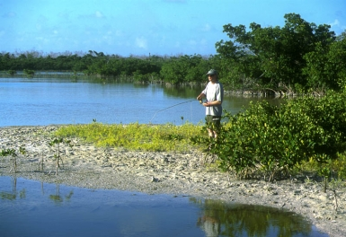 Mangrove - Many mangrove lagoons offer small sandy banks that you can stand on while casting. They are both higher and much more convenient than the often muddy and silty bottom