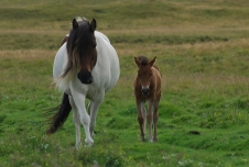 Mother and child - Not a bad way to grow up for a horse.