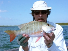 Mutton snapper from Cuba -