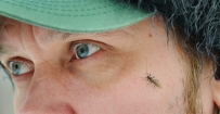 Seen any? - Have you seen any stoneflies?