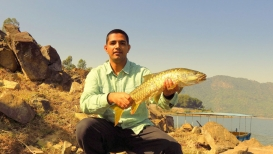 Mahseer - Mahseer are omnivorous fish which readily take anything from algae, insects, frogs, crustaceans and other fish.