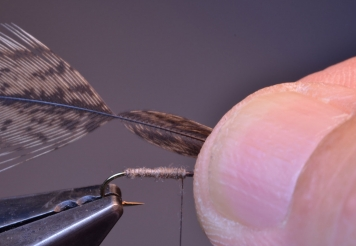 Step 2 - wing feather -