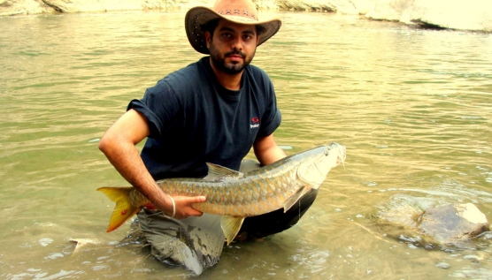 A large mahseer - Best times to fish for Golden Mahseer are the post-spawning runs in April-May and October-November.
