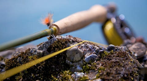 Alpine caddis - This nice Hi-Vis CdC-Caddis is a bit too elaborate for the business. Because you\'ll lose it most probably sooner than later to the ever hungry streamside vegetation, sunken wood or wedged between rocks.