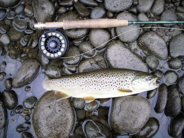 A brown trout -