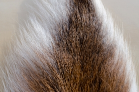 Natural bucktail - The natural bucktail is white on the edges and brown in the center. The longer hairs are on the edges.