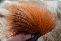 Stacking hair - This deer hair is long, straight and very thick, and perfect for spinning large bugs.
