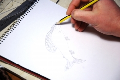 Sketching a grayling -