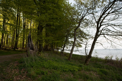 Forested beach - Many Danish coastal stretches have forest right down to the water\'s edge
