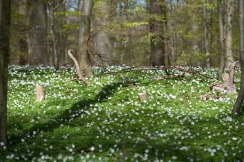 The spring forest - The spring trips are timed with the blooming of the flowers and trees