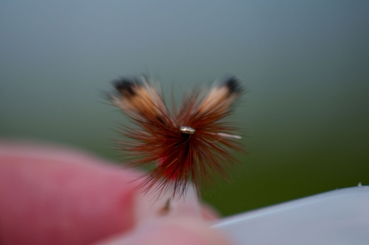 Dense hackle - One of the reasons for the Humpy\'s great ability to float is the dense hackle. Another one is the deer hair tail, body and wing