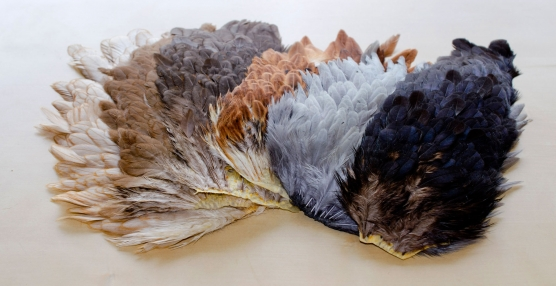 Natural hen hackle - A selection of hen saddles and necks showing the amazing variation available. The gray saddle second from the right is dyed.
