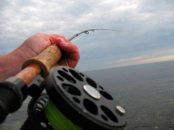 Shifting - Here I\'m shifting over the rod to the left hand for the purpose of taking a picture. I usually always cast and fight with the right hand and retrieve and spool with the left