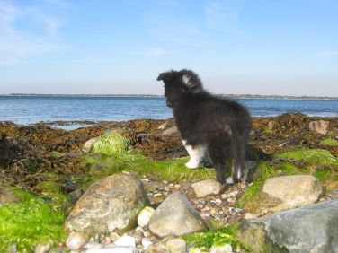 It\'s a big world - Being s small dog near the large ocean can be intimidating