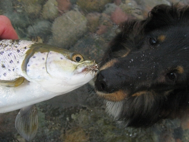 Kissing the fish - It\'s always nice to sniff a fish when one is caught