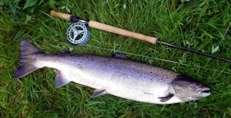Salmon on size 18 hook - This salmon of more than 7 kilos were willing to test the system. The treble hook was a size 18 and handled the job perfectly.