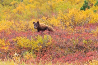 The bear in the flowers -