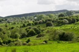 Lush landscapes - Ireland has a lot of landscape like this: varying and not intensely cultivated with lots of trees, hedges and stone walls