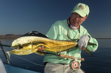 Dorado from Loreto, Mexico -