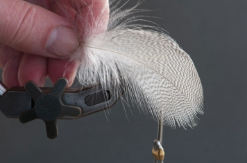 The whole feather - You need one good feather and will utilize it in three parts: the longest barbs for the tail/thorn, the soft part for the dubbed body and the short barbs in the tip for the shell and legs