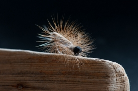 An aura - The long hairs on the larvae often give them a very bright aura, which is easy to imitate with a dry fly hackle