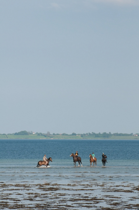 Sea horses - You see all kinds things on the Danish coast. Like these riders playing with their horses in the shallow water. There\'s room for everyone.