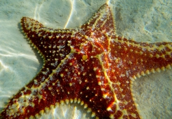 Beautiful starfish -