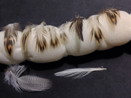 A wide selection - Having the whole skin means getting a very wide selection of feather types