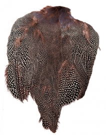 Guinea fowl - The black feathers with white spots are used for many classic as well as contemporary salmon flies