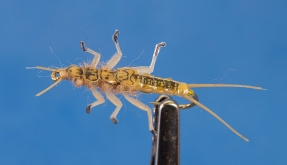 Stonefly nymph - Tied using Silver Tip Fly Company\'s stonefly body