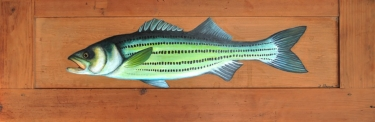 Striped bass -