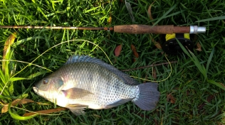 Tilapia - The prime target for this pattern