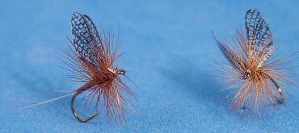 Veiled wings - The printed mayfly wings have fine veiling like the natural