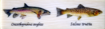 Trout pair inlay -