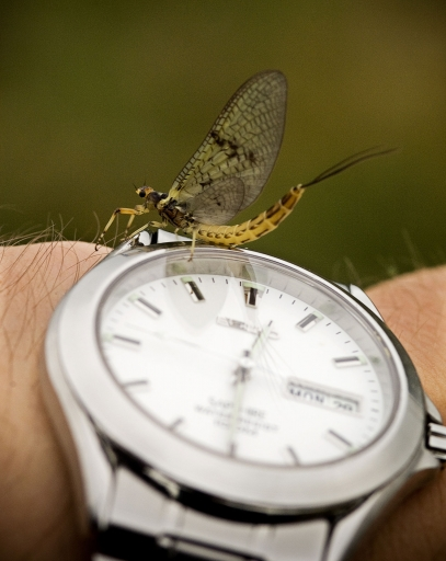 Mayfly time! -