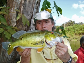 Peacock bass from Surinam -