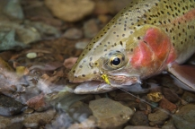 Rainbow on the Conejos -