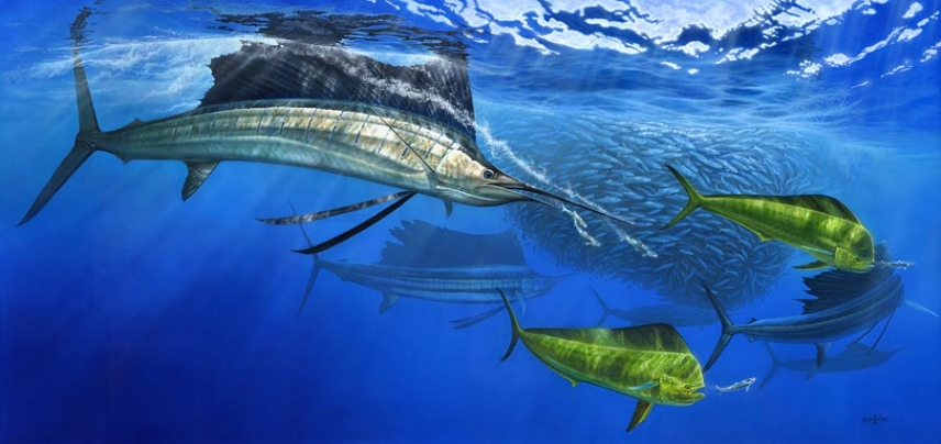 Turned On - Sailfish and dorado - a huge painting almost 2 meters or 6' long.
