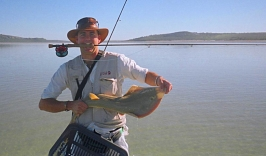Another sand shark in Langebaan lagoon -