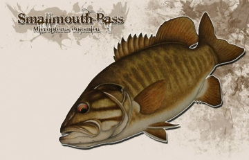 Smallmouth bass -