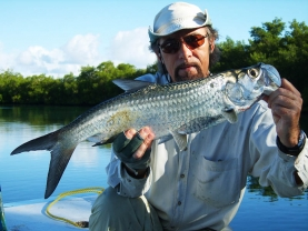 Tarpon from Tobago -
