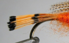 Tippet tail - You can see the bands and the fact that the black bands are more fluffy then the orange part of the barbs