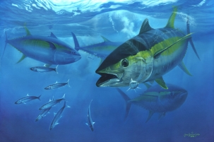 Yellowfin Torpedo - Yellowfin tuna