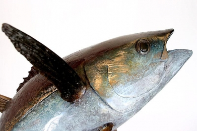 Yellowfin Tuna closeup - With some amazing details in the bronze