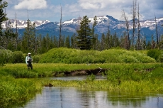 Yellowstone meadow -