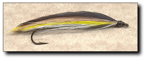 Ten Feather Emerald Shiner