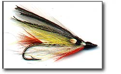 GOLDEN SHINER Image