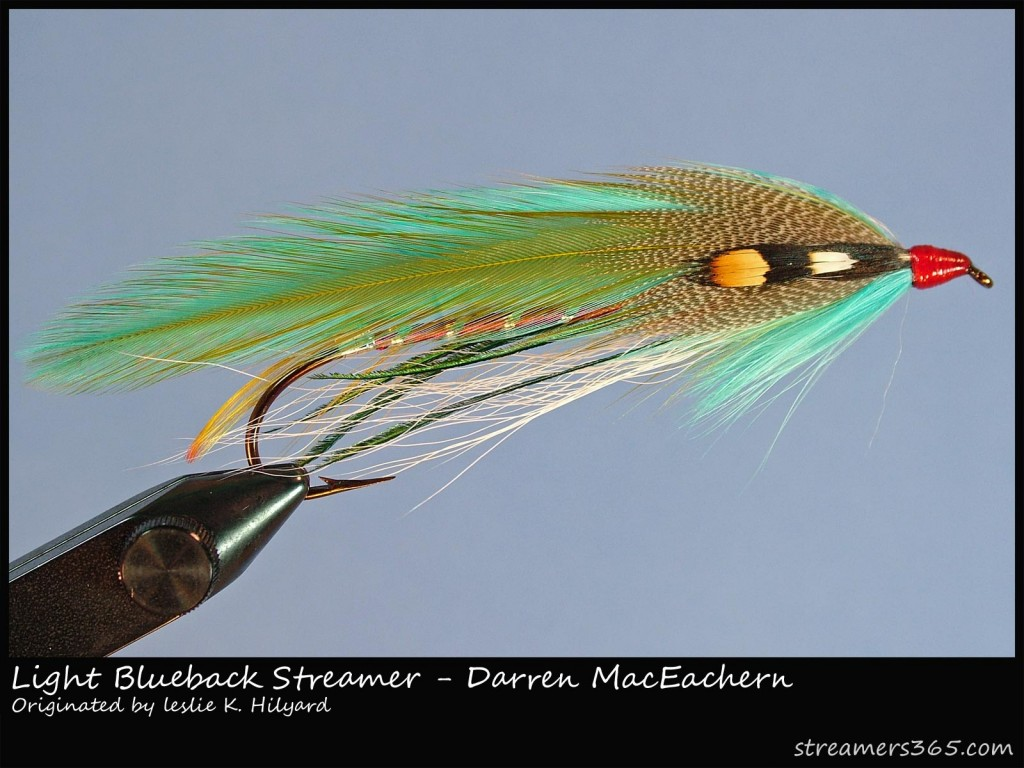 Light-blueback-Streamer